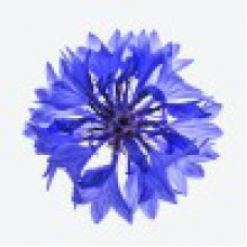 экстракт василька синего применение в косметологии